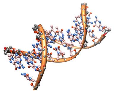 Borderline: Ursachen – genetische Veranlagung
